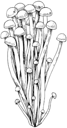 Zuchtpilz